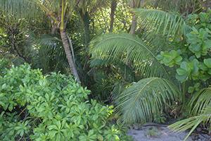 vegetation-300